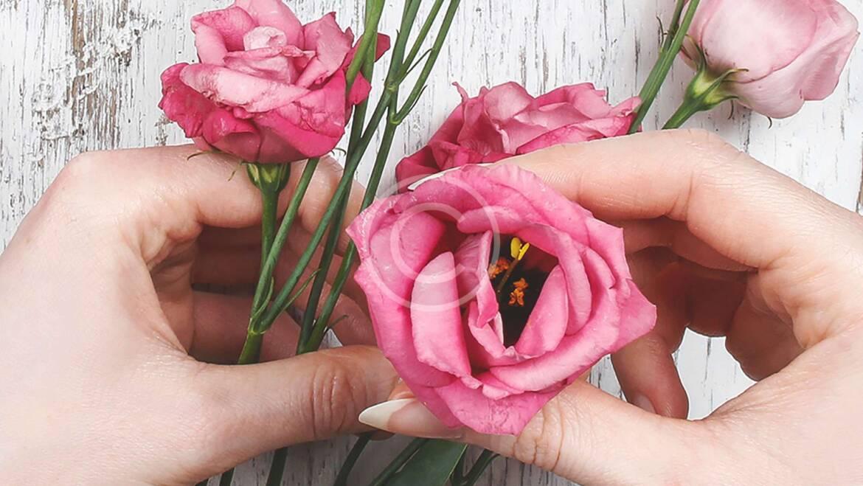 Evig blomster skønhed – fantastiske farver